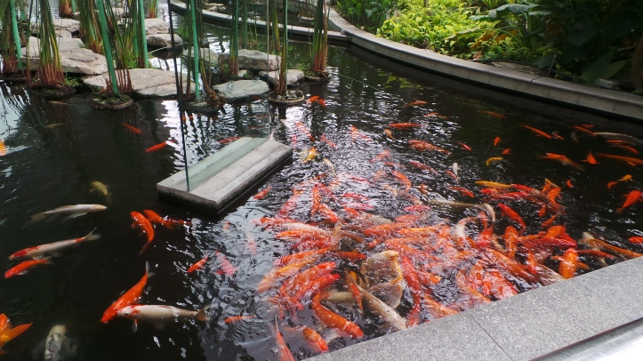 Coy fish pond outside of Guayaquil's airport.
