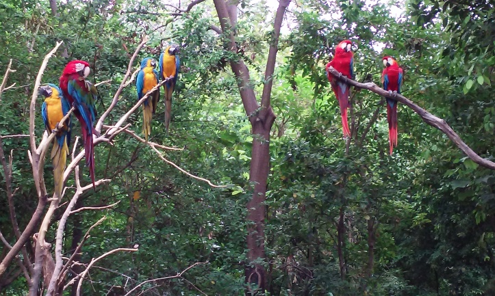 Parrots in one of Parque Historico's forest reserves.